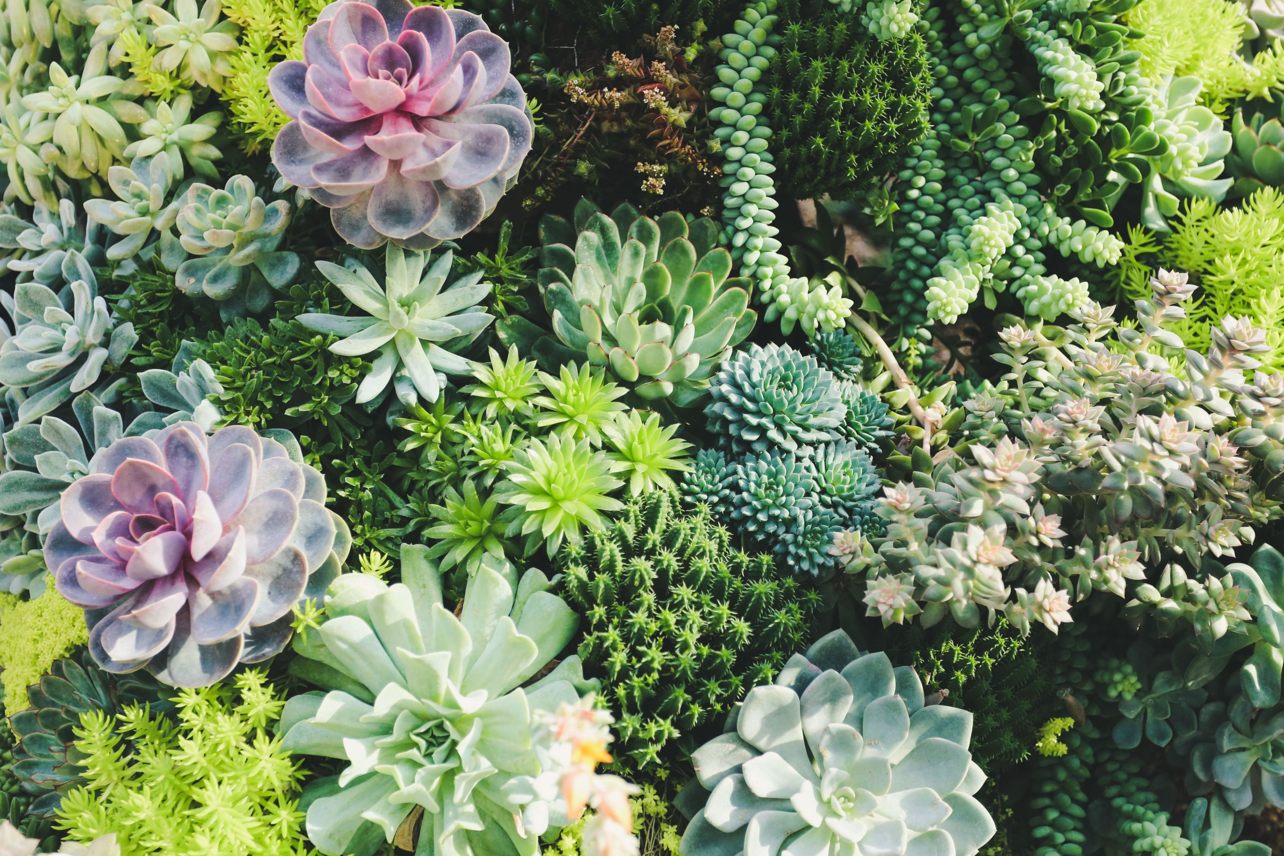 Image of succulents.